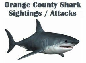Orange County Shark Sightings / Attacks